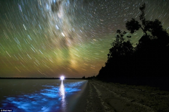 Via Lattea-bioluminescenza
